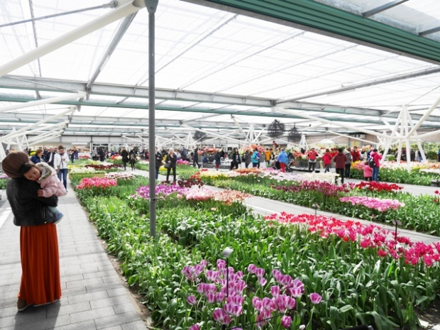 Indoor Flower exhibitions.JPG